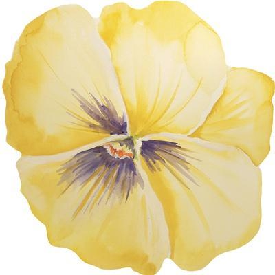 https://imgc.allpostersimages.com/img/posters/washy-yellow-pansie_u-L-Q1CABEP0.jpg?artPerspective=n