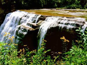 Water falling from rocks in a forest, Middle Falls, Genesee River, Letchworth State Park, New Yo...