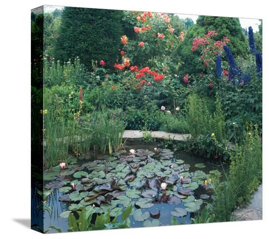Water Garden II--Stretched Canvas Print