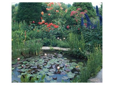 https://imgc.allpostersimages.com/img/posters/water-garden-ii_u-L-F74GR20.jpg?artPerspective=n