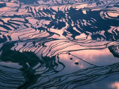 https://imgc.allpostersimages.com/img/posters/water-logged-rice-terraces-at-sunset-yunnan-province-china_u-L-P58FTO0.jpg?artPerspective=n