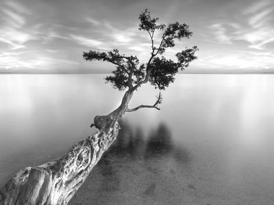 https://imgc.allpostersimages.com/img/posters/water-tree-xiii_u-L-Q10PC3P0.jpg?p=0