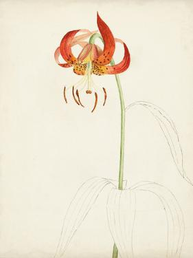 Watercolor Botanical Sketches I by 0 Unknown