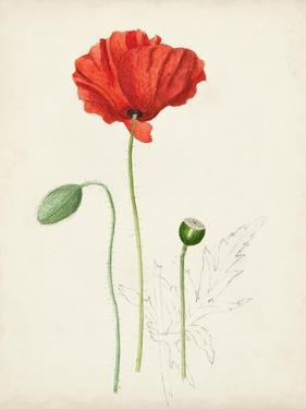 Watercolor Botanical Sketches IX by 0 Unknown