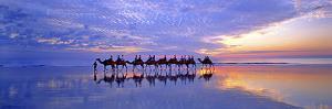 Cable Beach Camels by Wayne Bradbury