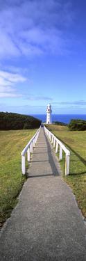 Cape Otway by Wayne Bradbury