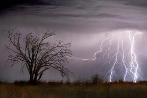 Lightning by Wayne Bradbury