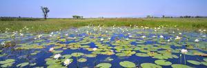 Lily Pond by Wayne Bradbury