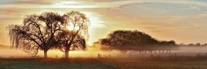 Misty Morning 2 by Wayne Bradbury