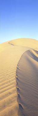 Mungo Dune Vert by Wayne Bradbury