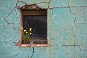 Window 3 by Wayne Bradbury
