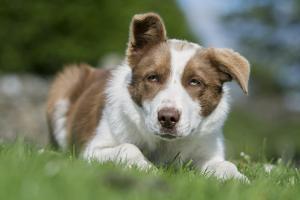 Domestic Dog by Wayne Hutchinson