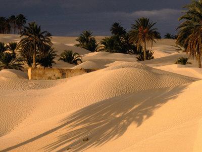 Palm Trees and Sand Dunes, Douz, Tunisia