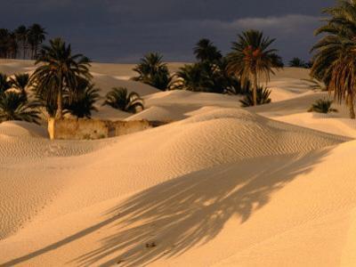 Palm Trees and Sand Dunes, Douz, Tunisia by Wayne Walton