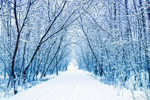 Winter by WDG Photo