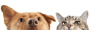 Dog and Cat up and close on the Camera by websubstance