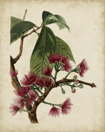 Non-Embellished Antique Fringe Tree