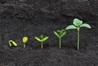 Plant Seedling by weerapat