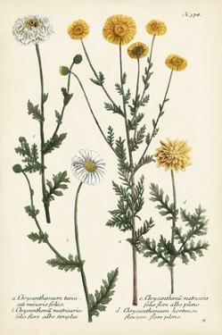 Saffron Garden IV by Weinmann