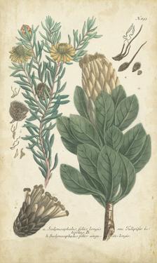 Weinmann Conifers III by Weinmann