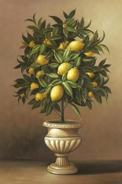 Potted Lemon Tree by Welby