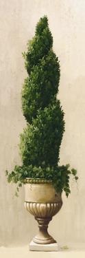 Spiral Topiary by Welby