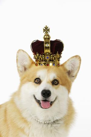 Welsh Corgi Dog Wearing Crown and Pearls