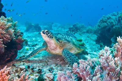 Green Turtle by Wendy A. Capili