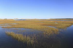 Salt Marsh, Sandwich, Cape Cod, Massachusetts, New England, United States of America, North America by Wendy Connett