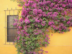Tequisquipan, Queretaro State, Mexico, North America by Wendy Connett