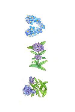Forget Me Nots by Wendy Edelson