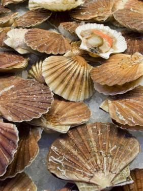 Display of Fresh Scallops, Venice, Italy by Wendy Kaveney