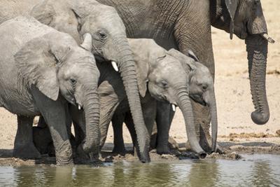 Namibia, Etosha National Park. Elephants Drinking at Waterhole