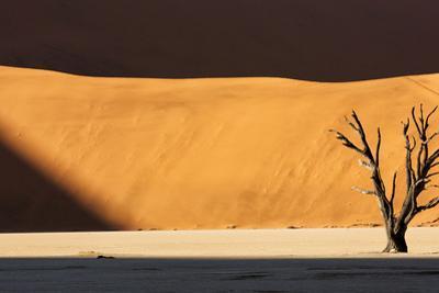 Namibia, Namib-Naukluft Park, Dead Vlei. a Dead Tree Illuminated