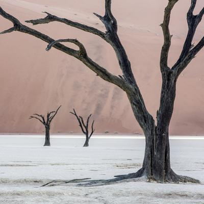 Namibia, Namib-Naukluft Park, Dead Vlei. Three Dead Trees at Sunrise