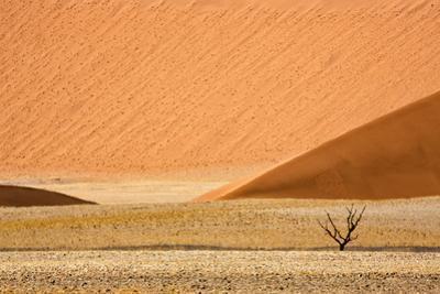 Namibia, Namib-Naukluft Park. Sand Dunes and Lone Dead Tree