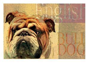 English Bulldog by Wendy Presseisen