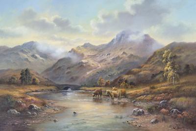 Highland Cattle I