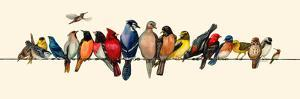 Bird Menagerie III by Wendy Russell