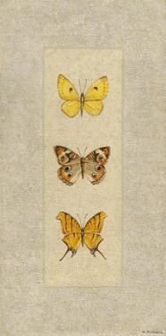 Butterfly Trio I by Wendy Russell