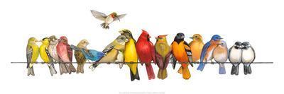 Large Bird Menagerie