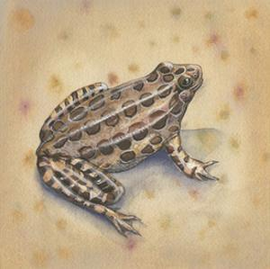 Pond Critters I by Wendy Russell