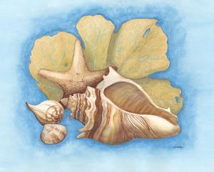 Seashells & Seafan II by Wendy Russell