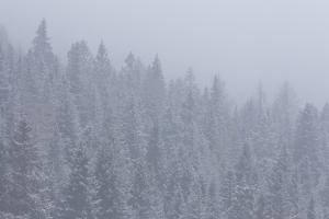 Misty Forest by Werner Van Steen
