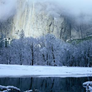 Mercad River and Snow-Covered Black Oak Trees in Front of El Capitan, Yosemite National Park by Wes Walker