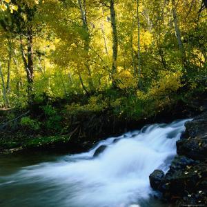 Stream Flowing Past Leafy Trees in Sierra Nevada Mountains, Ansel Adams Wilderness Area, USA by Wes Walker