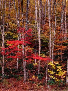Wonderful Autumn Colours of Green Mountains in Vermont, Vermont, USA by Wes Walker