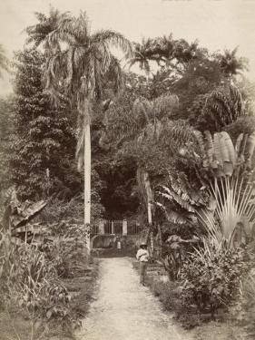 West Indies, Botanical Garden of St. Pierre, in the Martinique