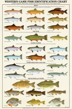 Western Gamefish Identification Chart