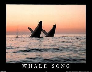 Whale Song Art Photo